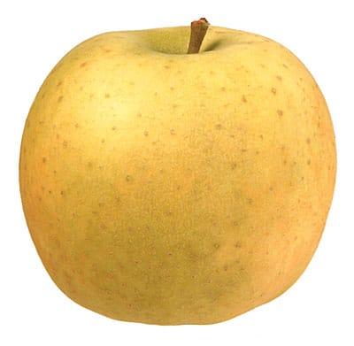 Pomme-Belchard